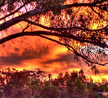 sunset through the trees #2 by BigAndRed
