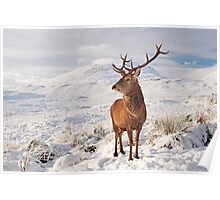 Deer Stag in the snow Poster