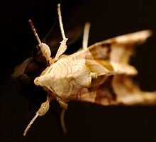 Moth by Epicurian