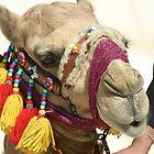 Camel by Julian Lowry