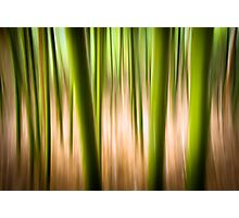 Vitality - Abstract Panning Bamboo Landscape Photography Photographic Print