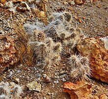 Native Cactus Palomino Valley by SB  Sullivan