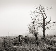 Dead Tree on a Foggy Day by Steve Silverman