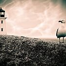 Peggy's Cove Seagull & Lighthouse by jphphotography