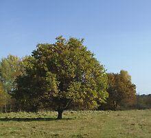 Autumn at Moorenbrunnfeld, Nuremberg by SophiaDeLuna