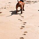 A Dog's Day on the Beach by Helen Barnett