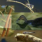 Wetlands Collage by RobsVisions