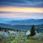 Blue Hour Blossoms - NC Blue Ridge Parkway Landscape in Spring by Dave Allen
