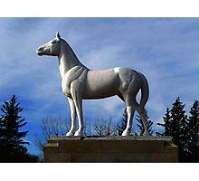 WHITE HORSE PLAINS  Photographic Print