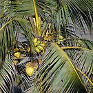Palm with Coconuts  -  Palma con Cocos by PtoVallartaMex