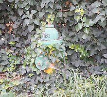 Fire Hydrant in Bisbee Arizona by thomacin