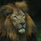 King Amongst Beasts by sbarnesphotos
