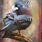 Finer Feathered Friends: Crested Dove by alan shapiro
