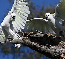 Get Off My Stump! by Phillip Weyers