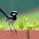 The Sticky Beak by Stephen  Nicholson