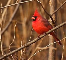 Simply Red by Jeff Weymier
