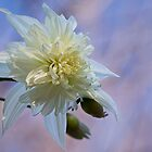 Dahlia imperialis &#x27;California Angel&#x27; by Celeste Mookherjee