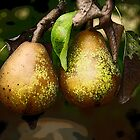 Pears by maxygreat
