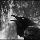 Bye Bye Blackbird by myraj