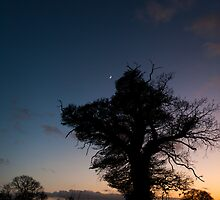 Winter tree and dusk by mattcattell