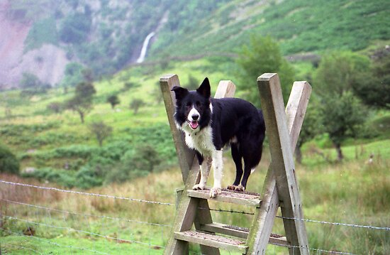 At Aber Falls with Young Indy by Michael Haslam