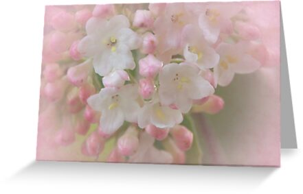 Delicate blossoms by Heather Thorsen