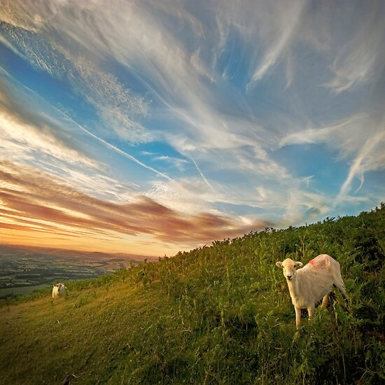 Long Mynd Hill by tarantella
