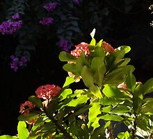 Plants And Flowers In Sunlight And Shade - Plantas Y Flores En La Luy Del Sol Y La Sombra by Bernhard Matejka