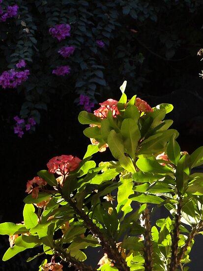 Plants and flowers in sunlight and shade plantas y - Plantas de sol y sombra ...
