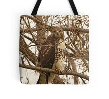 Red-Tailed Hawk Looking Right at Me Tote Bag