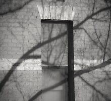 The Window Tree by Christine  Wilson Photography