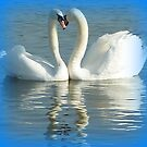 Mute swans displaying by Meladana