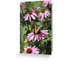 Echinacea with Butterfly 8835 Greeting Card