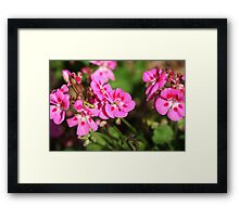 Rhododendron 8813 Framed Print