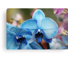 Blue Orchid 7053 Metal Print