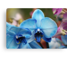 Blue Orchid 7053 Canvas Print