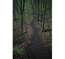 Ravine Trail 3310 Photographic Print