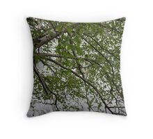 Birch Tree Waterscape 3129 Throw Pillow