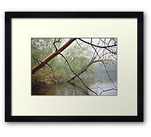 Birch Tree Waterscape 3203 Framed Print