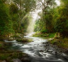 Rainforest River Retreat by Kristian Bell