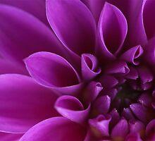 Flower macro by necieann