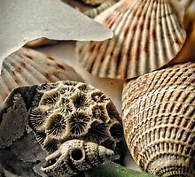 Seashells 2 by Robin Lee