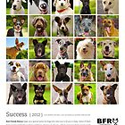 Best Friends Rescue 2013 by BFRQLD