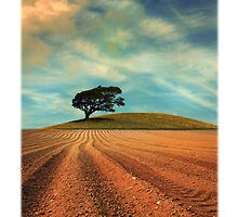 Furrowed Field with a Tree and a Hill by Mal Bray