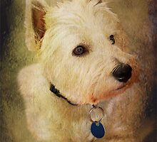Westie Portrait by Steven  Agius