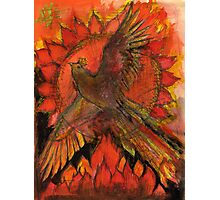 A phoenix for 2012 Photographic Print