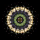 Mandala - Eye Within by Christopher Marshall