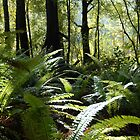 New Zealand Bush by nzpixconz