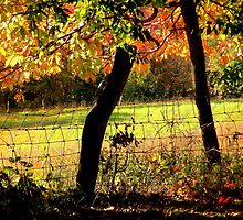 Field Through Trees and Barbed Wire Fence by TrendleEllwood