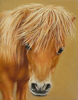 Miniature Pony Colt by Margaret Stockdale